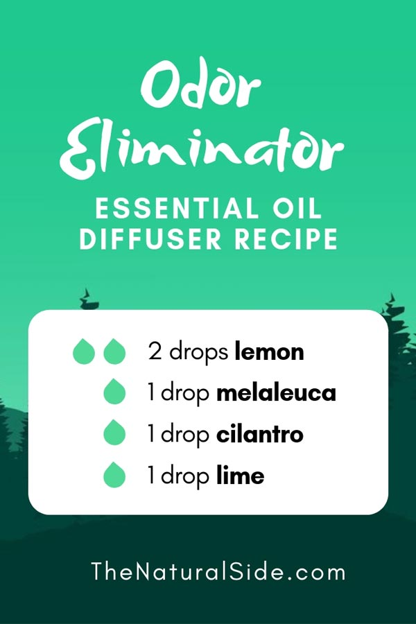 New to Essential Oils? Searching for Simple Essential Oil Combinations for Diffuser? Check out these 21 Easy Essential Oil Blends and Essential Oil Recipes Perfect for Beginners. #essentialoil #diffuser #headache Odor Eliminator Blend 2 drops lemon + 1 drop melaleuca + 1 drop cilantro + 1 drop lime