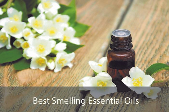 Here are the 11 Best Smelling Essential Oils for Diffuser that are so great. These Essential Oil Scents also have a wide range of Health Uses and Benefits.
